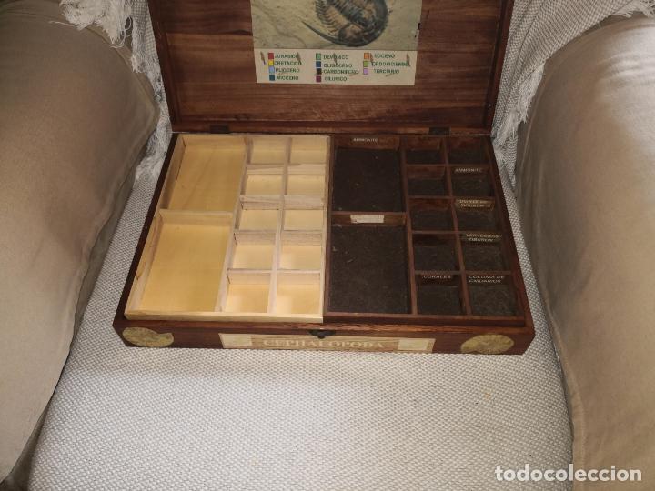 Coleccionismo de fósiles: ANTIGUA CAJA DE MADERA CON DOS NIVELES DE UN COLECCIONISTA DE FOSILES Y MINERALES - Foto 3 - 174549709