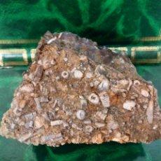 Coleccionismo de fósiles: TALLOS DE CRINOIDEOS . Lote 175330073