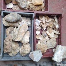 Coleccionismo de fósiles: LOTE FÓSILES CONCHAS ORIGEN ALMERÍA. Lote 176633337