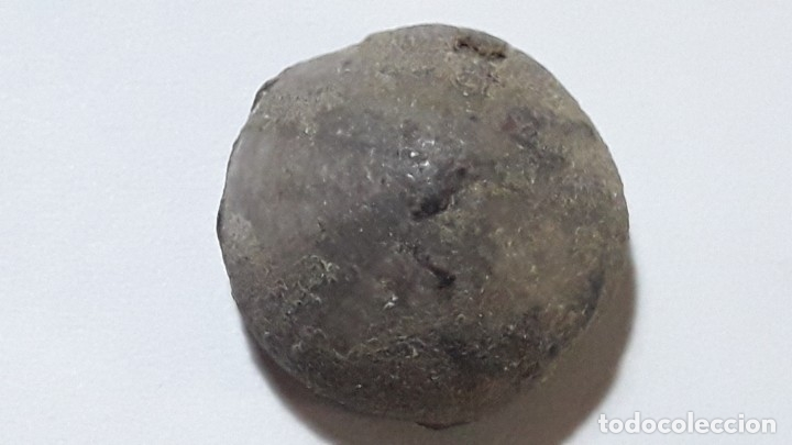 Coleccionismo de fósiles: FOSIL DE ERIZO COENHOLECTYPUS SIMILIS.CRETACICO. SUR DE EUROPA. - Foto 2 - 176825613
