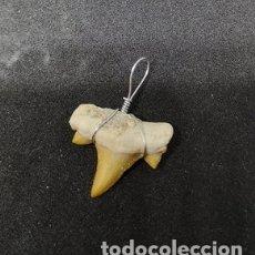 Coleccionismo de fósiles: DIENTE DE TIBURÓN COLGANTE. Lote 177247293