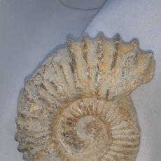 Coleccionismo de fósiles: AMMONITES. Lote 178217018