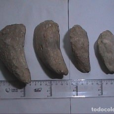 Coleccionismo de fósiles: LOTE DE CUATRO MOLUSCOS FÓSILES BIVALVOS. LITHODOMUS MYTILUS. CRETÁCICO - MIOCENO.. Lote 178851260