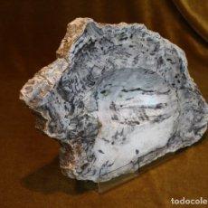 Coleccionismo de fósiles: XILÓPALO, MADERA FÓSIL (TRIÁSICO ARGENTINO). 200-250 MILLONES DE AÑOS. . Lote 179396480