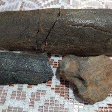 Coleccionismo de fósiles: (DIENTE FÓSIL POR VERIFICAR ESPECIE ). MÁS ARTÍCULOS ANTIGUOS EN MI PERFIL.. Lote 180262698