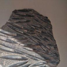Coleccionismo de fósiles: FOSIL ORTHOCERAS. Lote 184491286