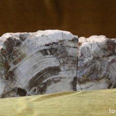 Coleccionismo de fósiles: PAREJA DE XILÓPALOS, MADERA FÓSIL (TRIÁSICO ARGENTINO). 200-250 MILLONES DE AÑOS. . Lote 187315415