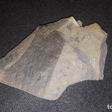 Coleccionismo de fósiles: FOSIL- PLANTAS-PLACA CON CALAMITES. Lote 184383592