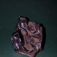 Collectionnisme de fossiles: GRAN DIENTE DE RINOCERONTE LANUDO ENVIO INCLUIDO. Lote 190308296
