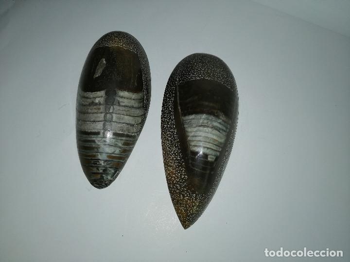 DOS FÓSILES PULIDOS ORTHOCERAS (Coleccionismo - Fósiles)