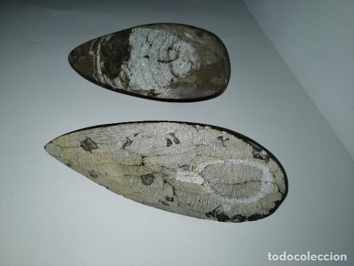 Coleccionismo de fósiles: Dos fósiles pulidos orthoceras - Foto 2 - 190543253