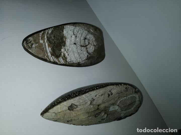 Coleccionismo de fósiles: Dos fósiles pulidos orthoceras - Foto 3 - 190543253