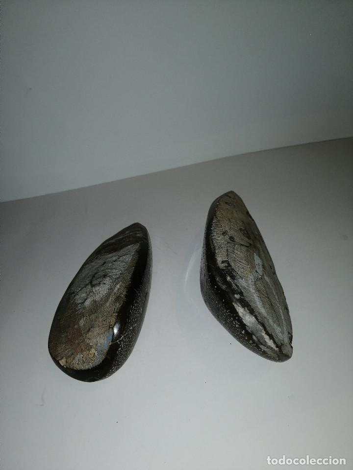 Coleccionismo de fósiles: Dos fósiles pulidos orthoceras - Foto 4 - 190543253