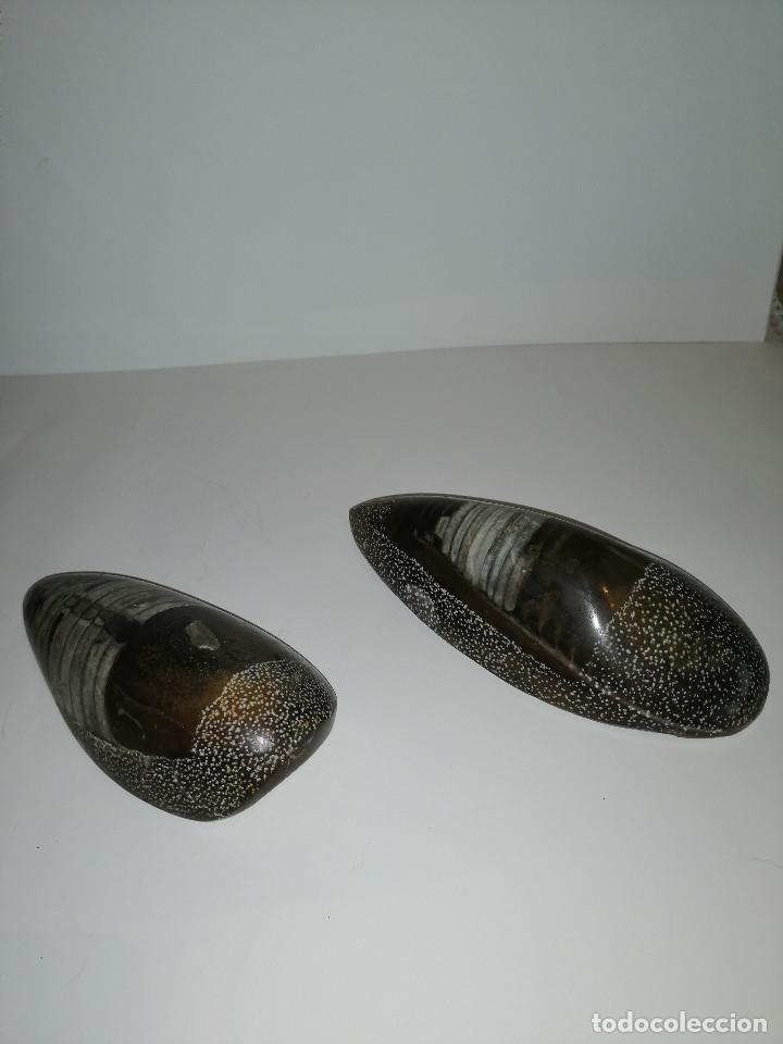 Coleccionismo de fósiles: Dos fósiles pulidos orthoceras - Foto 6 - 190543253