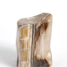 Coleccionismo de fósiles: XILÓPALO. MADERA FÓSIL PETRIFICADA. PULIDA. ORIGEN BALI. Lote 191606988