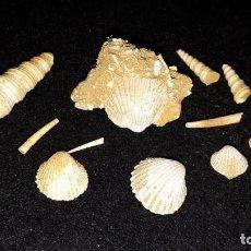 Coleccionismo de fósiles: FOSIL- LOTE FOSILES DEL MIOCENO FRANCÉS . Lote 191825828