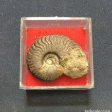 Coleccionismo de fósiles: AMMONITE PIRITIZADO - FRANCIA - 3X2,5CM. Lote 193908097