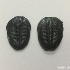 Coleccionismo de fósiles: PAREJA DE ELRATHIA KINGII - CAMBRICO - UTAH USA - 3X2CM. Lote 194279741