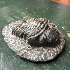 Coleccionismo de fósiles: FÓSIL DE TRILOBITES 13X10X5CM, 550GR. Lote 194399776