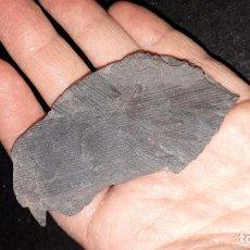 Coleccionismo de fósiles: FOSIL- PLANTAS CALAMITES . Lote 194724098