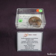 Coleccionismo de fósiles: SURITES (BOJARKIA) MESEZHNIKOWI (SHULGINA,1969) - AN49, RARO Y ESCASO. Lote 194943985