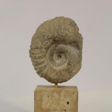 Coleccionismo de fósiles: FOSIL AMONITE. Lote 195162050