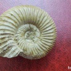 Coleccionismo de fósiles: FÓSIL DE AMONITE BINATISPHINCTES.. Lote 195170218