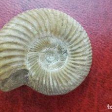 Coleccionismo de fósiles: FÓSIL DE AMONITE BINATISPHINCTES.. Lote 195170560