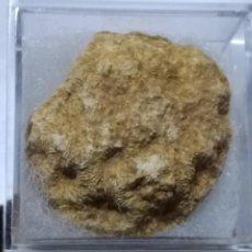 Coleccionismo de fósiles: FOSIL DE DIMORPHASTRAEA. CRETACICO. SUR DE EUROPA.. Lote 195406156