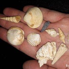 Coleccionismo de fósiles: FOSIL- LOTE FOSILES DEL MIOCENO FRANCÉS . Lote 195420957