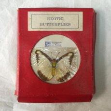 Coleccionismo de fósiles: COLECCION DE 19 DIFERENTES MARIPOSAS EXOTICAS - DISECADAS- EXOTIC BUTTERFLIES - TAMAÑO APROX 5,5X5CM. Lote 195955717