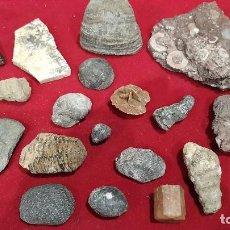 Coleccionismo de fósiles: LOTE DE 21 FÓSILES DIVERSOS .VER FOTOS. Lote 197133123