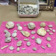 Coleccionismo de fósiles: COLECCION DE FOSILES 1KILO . Lote 202417140
