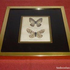 Coleccionismo de fósiles: CUADRO CON 2 MARIPOSAS DISECADAS.. Lote 205462891
