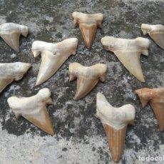 Coleccionismo de fósiles: DIENTES DE TIBURÓN FOSILIZADOS - EXTRAORDINARIO LOTE. Lote 205535522