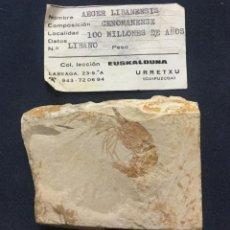 Coleccionismo de fósiles: AEGER LIBANENSIS - CENOMANIENSE - 100 MILLONES DE AÑOS - LIBANO - MATRIZ 7X5,5CM - FOSIL 4X3CM. Lote 205811495