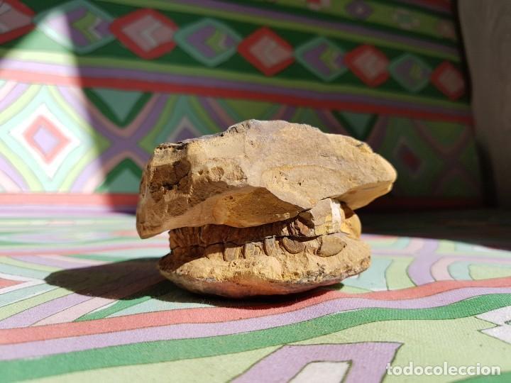 Coleccionismo de fósiles: TRILOBITES FÓSIL - Foto 3 - 206212481