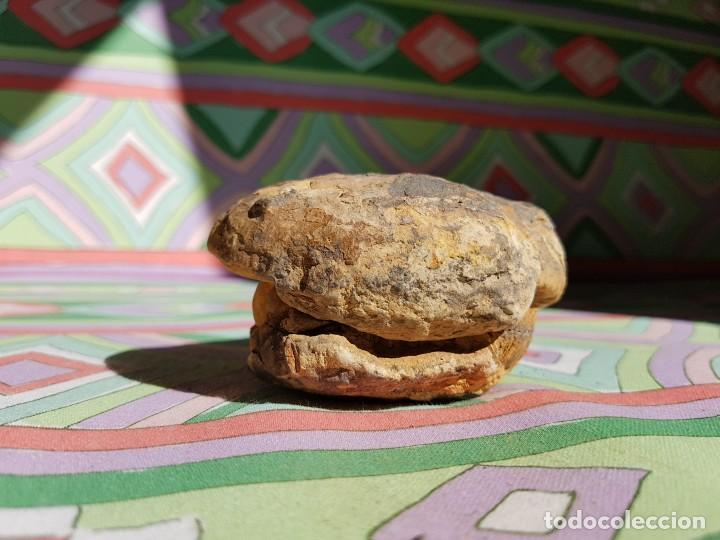 Coleccionismo de fósiles: TRILOBITES FÓSIL - Foto 4 - 206212481