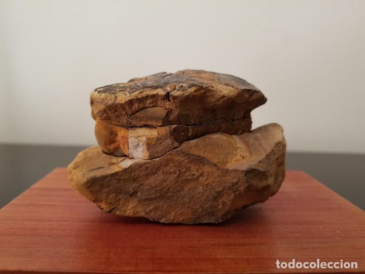 Coleccionismo de fósiles: TRILOBITES FÓSIL - Foto 9 - 206212481