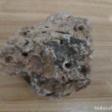 Coleccionismo de fósiles: GRUPO DE FÓSILES DE MOLUSCOS (SIERRA DE ENGUERA, VALENCIA). Lote 206284272