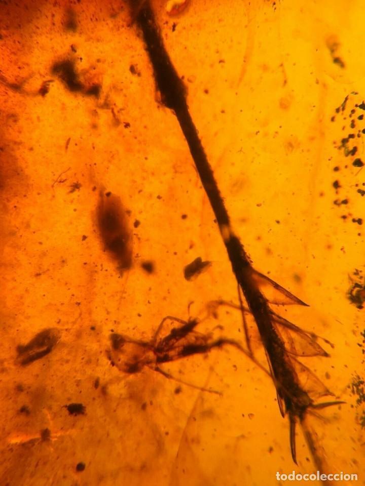 Coleccionismo de fósiles: ÁMBAR NATURAL CON MUCHOS INSECTOS. 3,7 cm. CRETÁCICO. MINERALES. FÓSIL. GEMAS. OBSERVEN FOTOS. - Foto 7 - 194495542