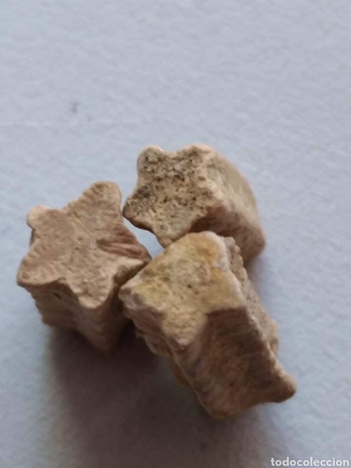 Coleccionismo de fósiles: CRINOIDES FÓSILES ISOCRINUS. JURÁSICO. EUROPA. - Foto 3 - 207378946