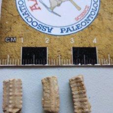 Coleccionismo de fósiles: CRINOIDES FÓSILES ISOCRINUS. JURÁSICO. EUROPA.. Lote 207378946