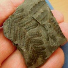 Collectionnisme de fossiles: PLANTAS-NEUROPTERIS OVATA-CARBONÍFERO-OSNÄBRUCH-ALEMANIA L-923. Lote 209688931