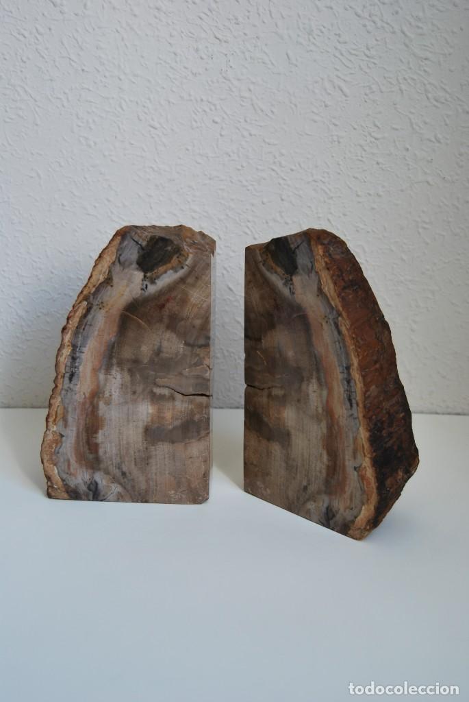 MADERA FÓSIL - XILÓPALO - TRIÁSICO - DOS SECCIONES DEL MISMO TRONCO - ÁRBOL (Coleccionismo - Fósiles)