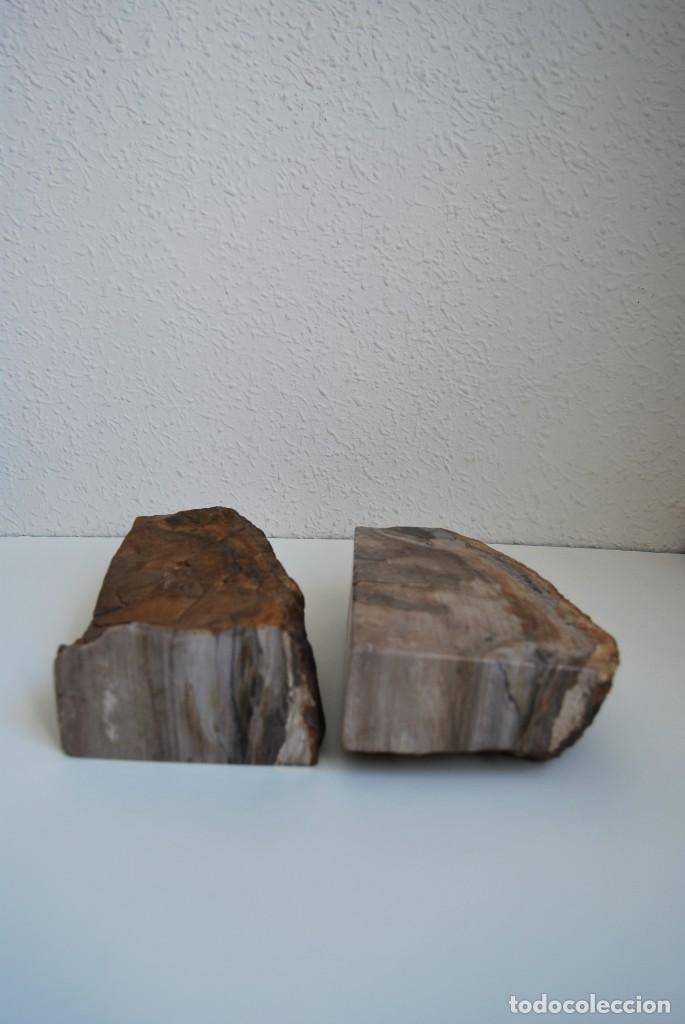 Coleccionismo de fósiles: MADERA FÓSIL - XILÓPALO - TRIÁSICO - DOS SECCIONES DEL MISMO TRONCO - ÁRBOL - Foto 7 - 211757773