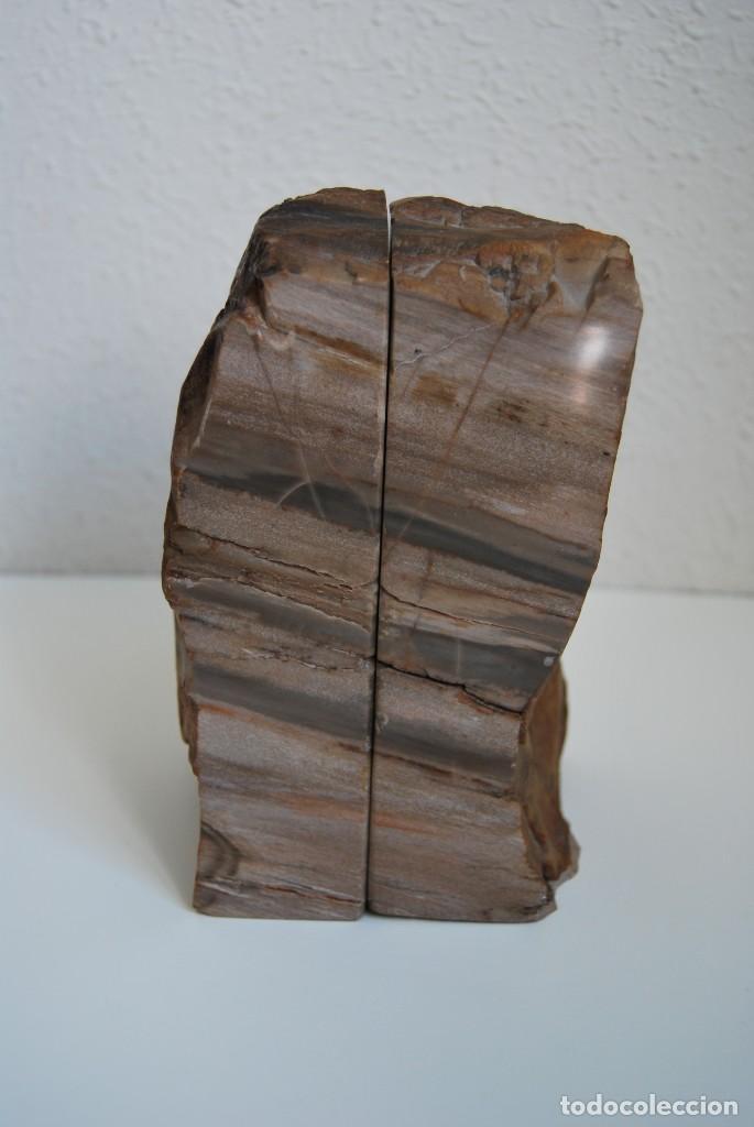 Coleccionismo de fósiles: MADERA FÓSIL - XILÓPALO - TRIÁSICO - DOS SECCIONES DEL MISMO TRONCO - ÁRBOL - Foto 8 - 211757773
