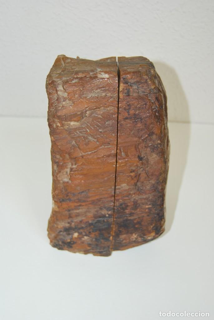 Coleccionismo de fósiles: MADERA FÓSIL - XILÓPALO - TRIÁSICO - DOS SECCIONES DEL MISMO TRONCO - ÁRBOL - Foto 9 - 211757773