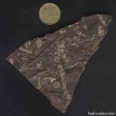 Coleccionismo de fósiles: Z-131- ROCA FOSILIFERA. Lote 213373957