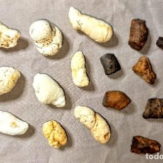 Coleccionismo de fósiles: LOTE DE COPROLITOS DE PECES CALIZOS Y PIRITIZADOS. Lote 214053335